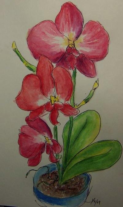 34-red-iris