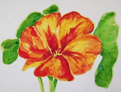 48-spring-flower