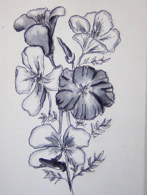 49-poppies-01