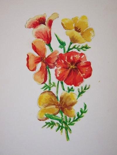 49-poppies-02