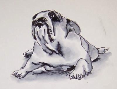 50-bulldog