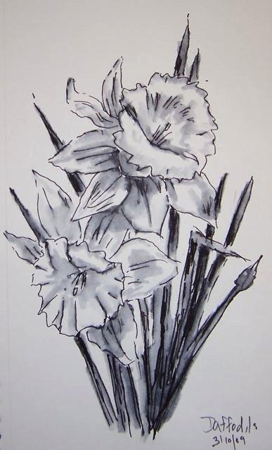 52-daffodils