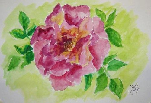 53-pink-rose