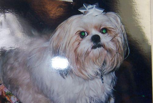 Photo of Bishi