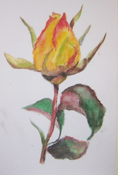 Yellow rose_10_6