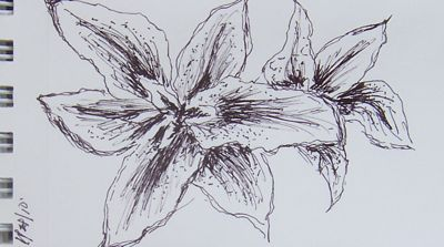 Drawing-Lillies-1-20