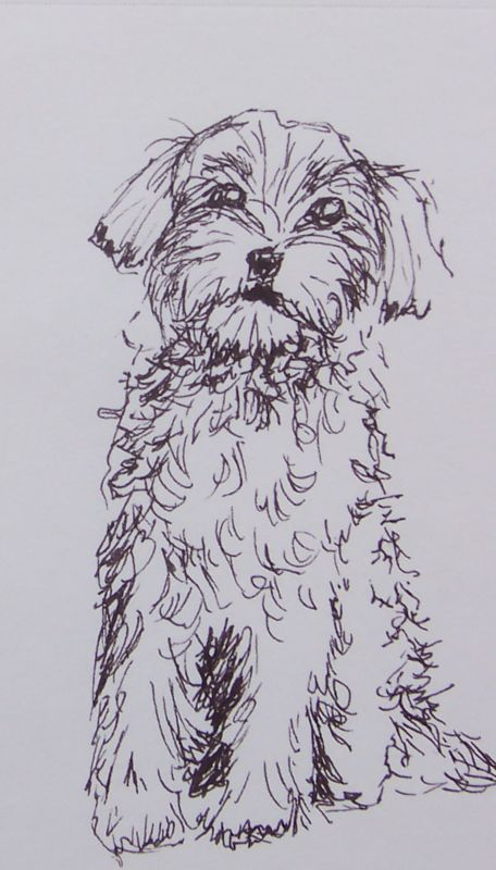 Drawing-Poodle Doodle-1-7-10