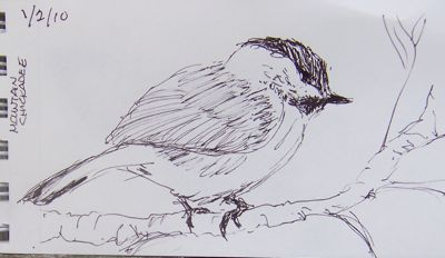 Drawing-bird-1-20