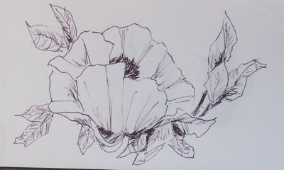 Drawing-poppy-1-5-10